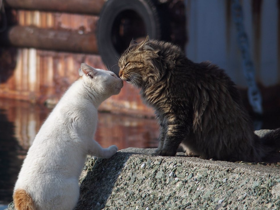 Images of the lively drowsy life on Japan's 'Feline Island,' where felines surpass human beings 8 to 1