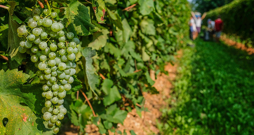 Prosecco production takes a toll on northeast Italy's environment