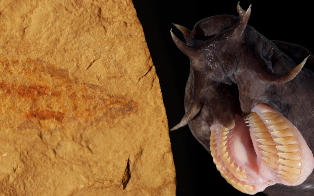 100- Million-Year-Old Hagfish Total with Slime Set Found