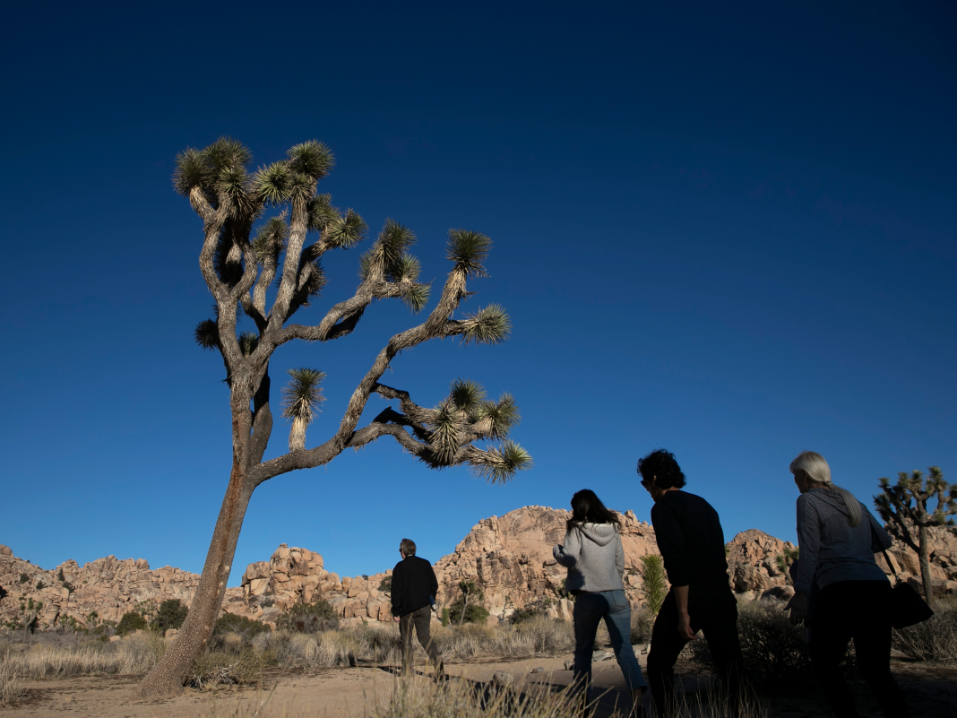 It might take 300 years for Joshua Tree National forest to recuperate from the federal government shutdown