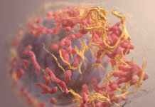 Researchers Discover A Possible 'Off Change' For Aggressive Cancer Malignancies