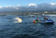 Drifting Sperm Whale Carcass That Appears Like Puffy Marshmallow Haunts Hawaii