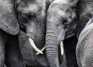 Human beings Are Consuming The majority of Earth's Largest Animals to Termination