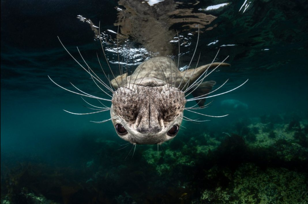 Images: Sensational Shots of the Natural World and Wildlife