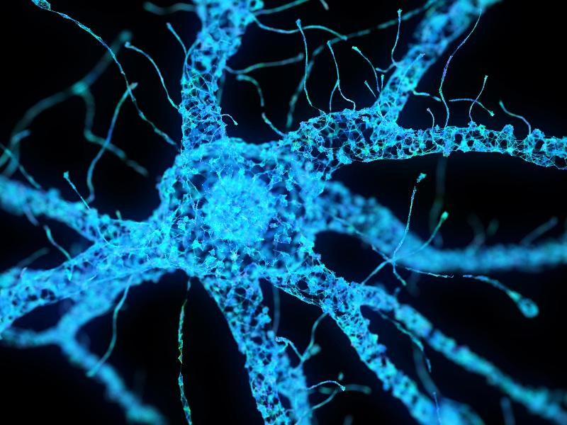 Why Can't Nerve Cells Grow Back?