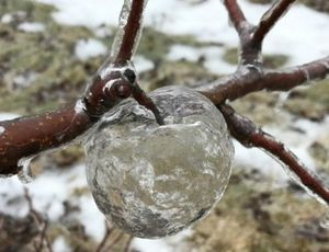 Witness frozen 'ghost apples,' thanks to the polar vortex