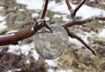 What The Heck Are These 'Ghost Apples' Identified In Michigan?