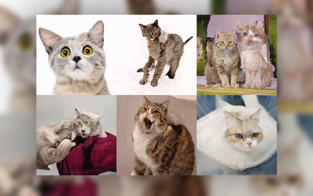 AI Draws at Making Charming Feline Pictures, Plainly Misses Out On the Whole Point of the Web