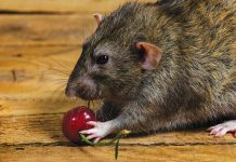 Brain cells integrate location and taste to make food maps