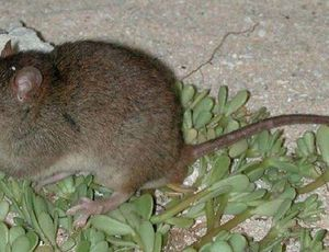 Environment modification formally exterminates its very first mammal types