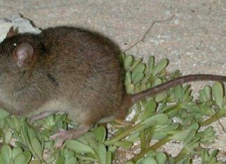 This Is The Very First Mammal That Environment Modification Has Actually Formally Driven To Termination