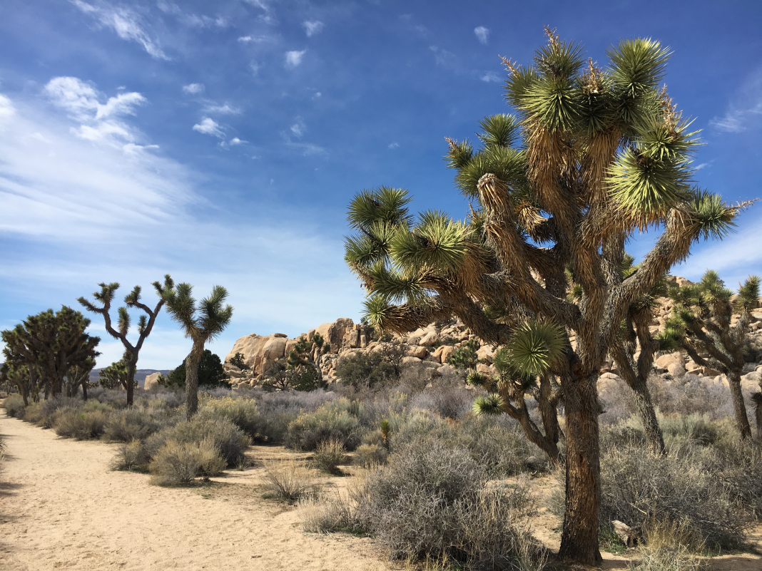 I went to Joshua Tree after the federal government shutdown. Although it looked picture-perfect, it might in fact take the park 300 years to recuperate from the damage.