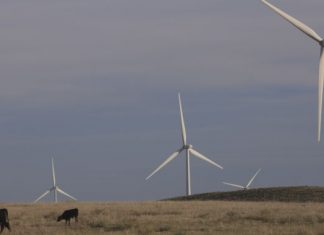 Alphabet subsidiary experienced AI to anticipate wind output 36 hours ahead of time