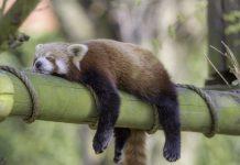 Can Any Animal Endure Without Sleep?