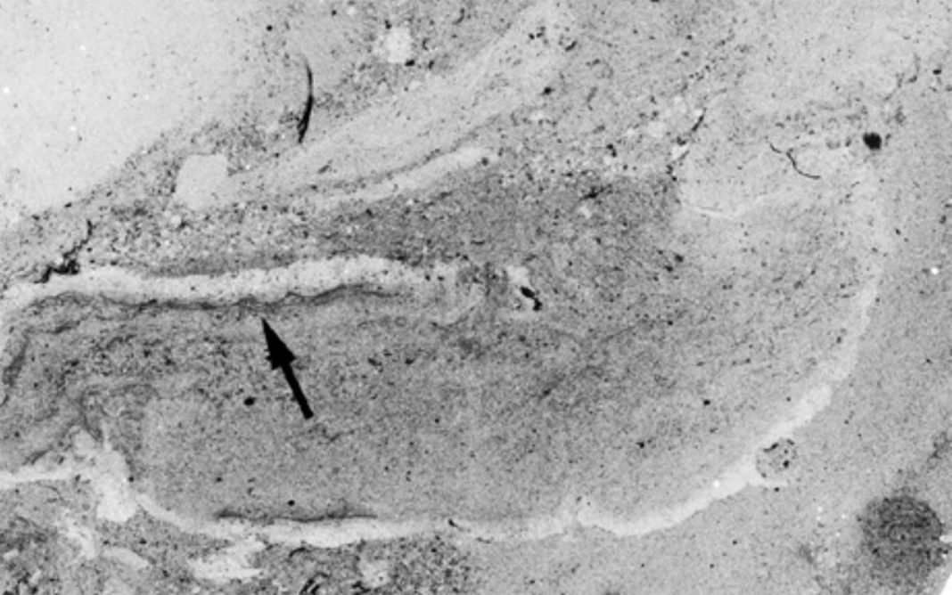 500 Million-Year-Old Worm Superhighway Revealed in Ancient Seafloor
