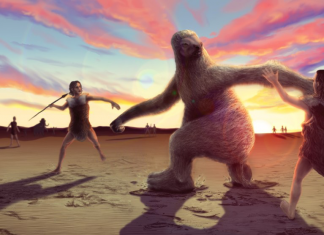 Human beings as soon as hunted and butchered huge ground sloths in South America, 12,600- year-old bones expose