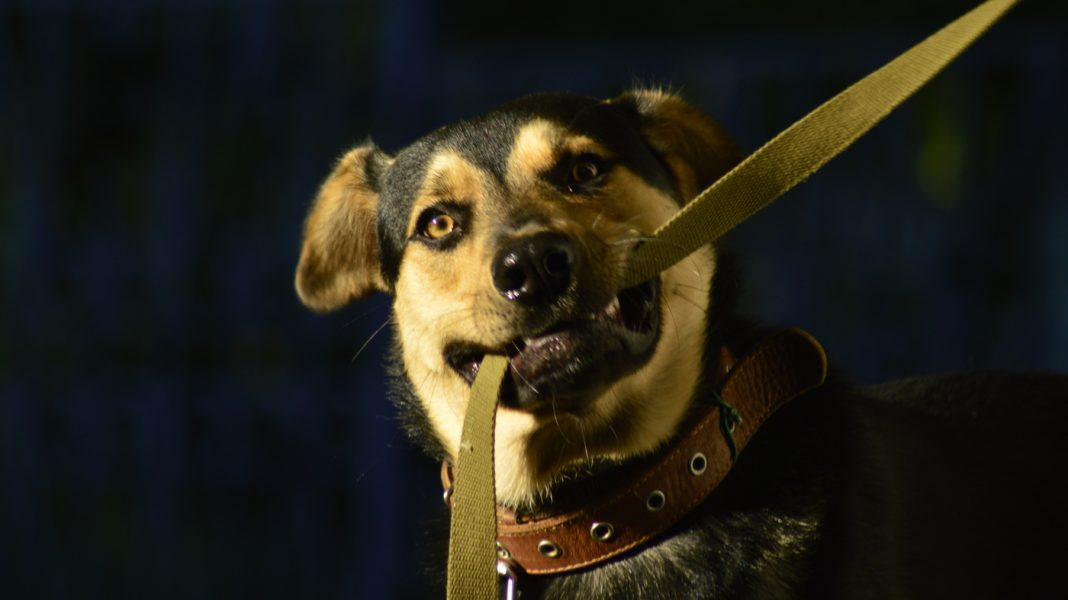 Stroll Your Pet Dog, However Watch Your Footing: Bone Breaks Are On The Increase