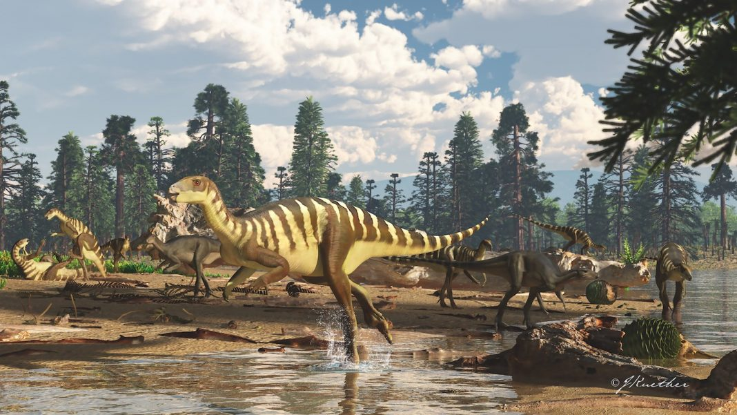Wallaby-Size Dinosaur Discovered in Australia (Crikey!)