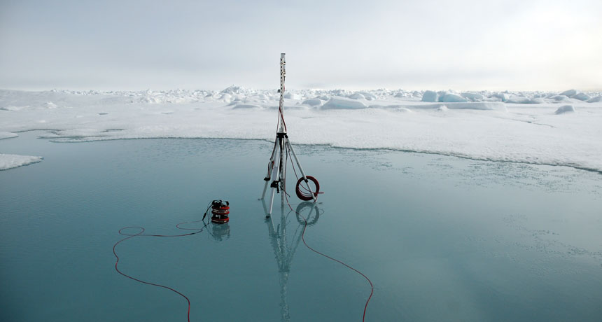 What takes place when the Bering Sea's ice vanishes?