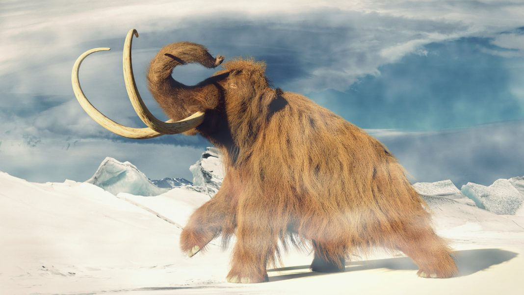 Massive DNA Quickly 'Got Up' Inside Mouse Eggs. However Cloning Mammoths Is Still a Pipeline Dream.