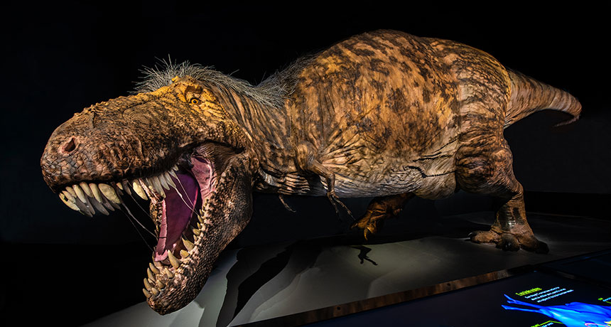 A brand-new T. rex display takes a deep dive into the renowned dinosaur