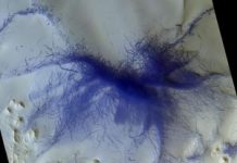ExoMars area orbiter witnesses 'dust devil craze' on Mars