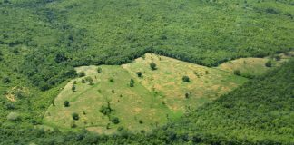 Tropical Forests Are Being Replanted, However For How Long Will the New Trees Last?
