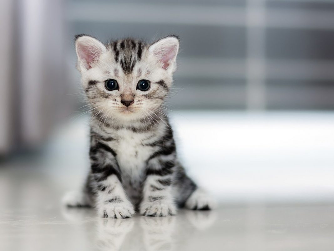 USDA Fed Felines and Pet Dogs to Kittens, Alarming Guard Dog Report Claims