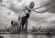 Unbelievable Photos Capture Last Glance of Long-Tusked 'Elephant Queen'