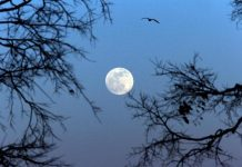 Do Supermoons Matter? Yes! Why You Required To See Tonight's 'Equinox Supermoon' For Its 'Moon Impression'