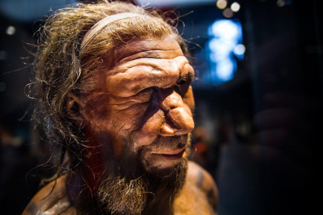 How Smart Were Neanderthals?