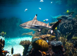 Sharks Split The Case: Revealing Prohibited Activities In Paradise