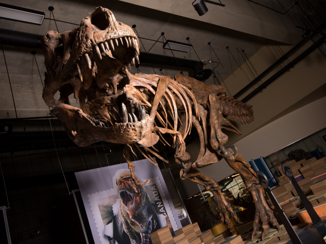 Paleontologists have actually found the world's most significant and longest-lived T. rex. It weighed nearly 20,000 pounds.