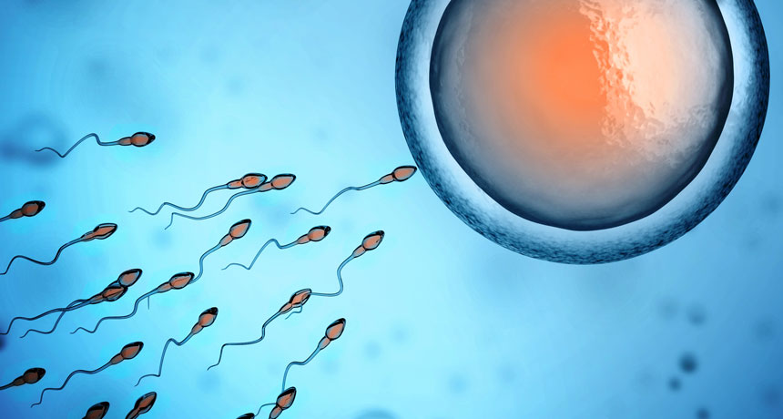 Sperm with broken DNA might trigger some repeat miscarriages