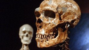 Neanderthal cannibalism is less unexpected than you believe