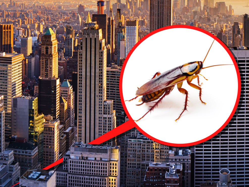 Your apartment or condo area can impact how cockroaches, rats, and mice get in. A New york city City pest control man informed us the locations he 'd never ever live.