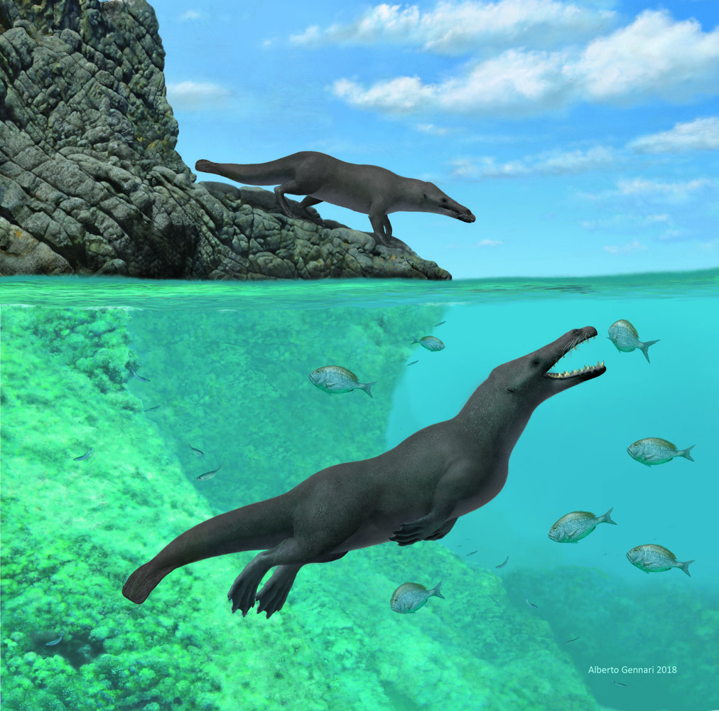 Ancient Four-Legged Whale Swam Throughout Oceans, Strolled Throughout Continents