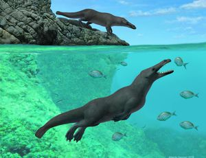 Oddball ancient whale had 4 legs, hooves on its toes