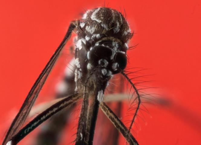 Mosquitoes Do Not Like Skrillex, However Listening To His Music Isn't Enough To Keep Them Away