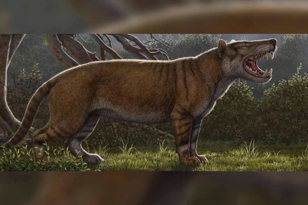 This Ancient 'Warg' Was Scarier Than a Tolkien Monster, Terrified Kenya 22 Million Years Ago