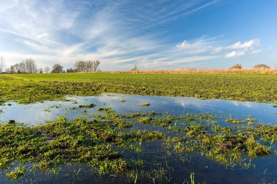 Wet Weather Condition And Flooding Are Evaluating U.S. Farming