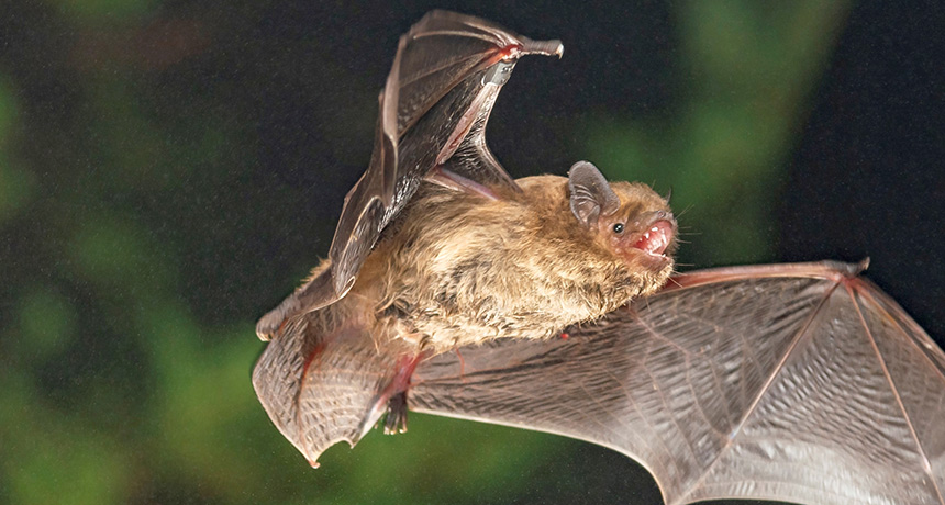 A researcher utilized chalk in a box to reveal that bats utilize sundowns to move