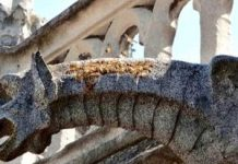 Bees on Notre Dame roof endure today's disastrous fire