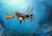 'Stunning Nightmare' Crab Sported Lobster Shell, Shrimp Mouth and Soccer Ball Eyes
