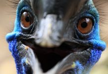 Giant Bird That Killed Its Owner Heads to Auction