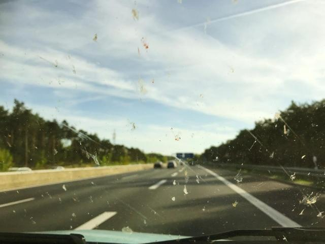 Even The Dead Bugs On Your Windscreen Have Their Own App
