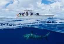 Locating Sharks In The Bahamas