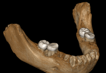 A 160,000- year-old jaw from a human forefather was discovered in a Tibetan cavern. It may discuss why Tibetans have the ability to live at high elevations today.