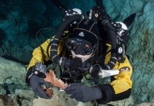 Glacial Epoch Bear and Wolf-Like Animal Found in Undersea Mexican Cavern