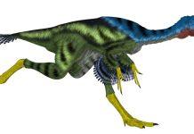 A dinosaur's running gait might expose insights into the history of bird flight